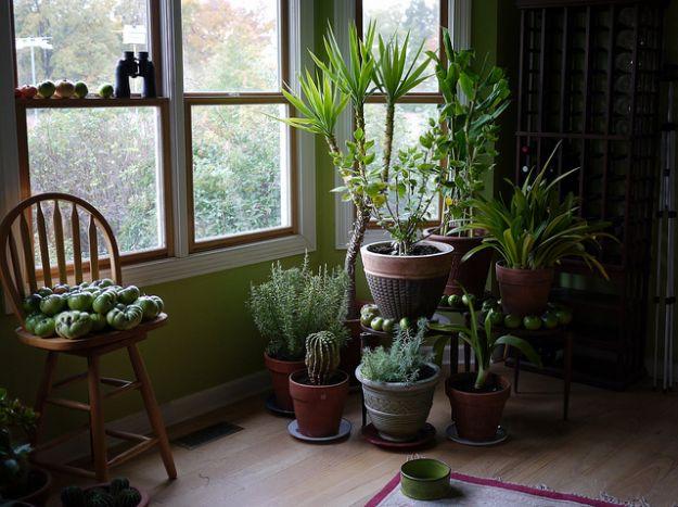 piante-in-casa