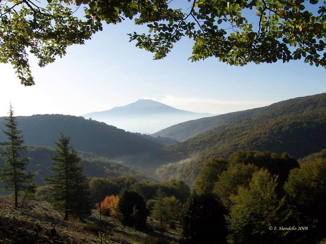 foto di un bosco sui Nebrodi