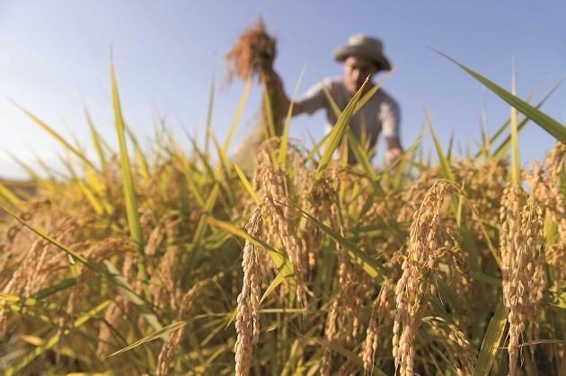 coltivazioni bio