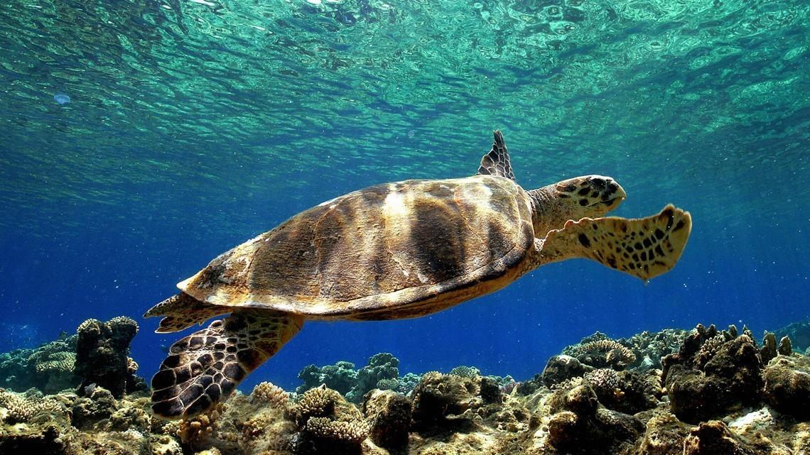 foto Tartaruga marina