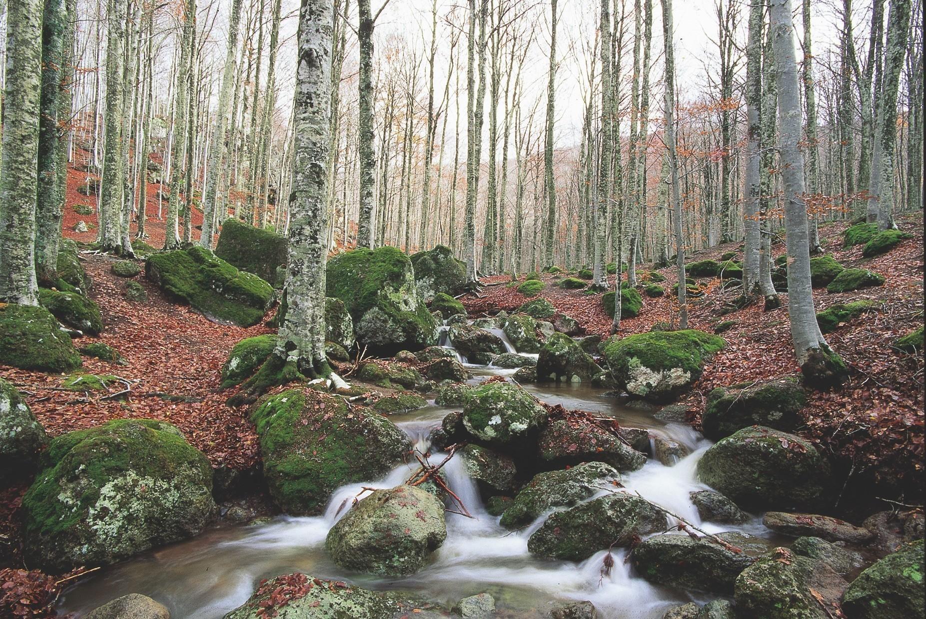 Amiata (gr) 2 Consorzio Forestale Dell'amiata