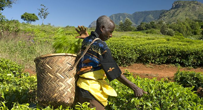 Fair Trade, l'appello