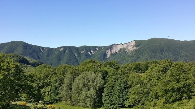 un'immagine di un bosco in Toscana