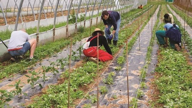 immagine di persone che stanno lavorando in una serra