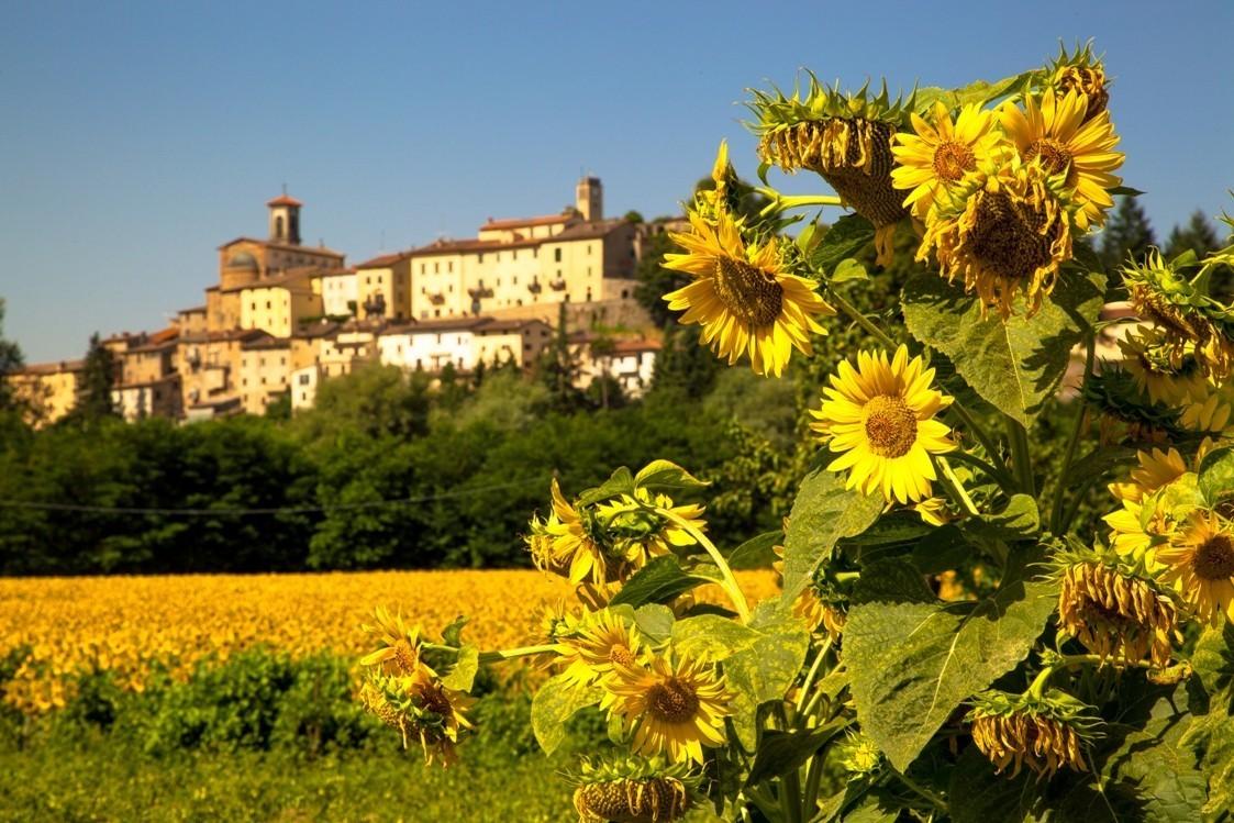 Panorama vi Monterchi Girasoli