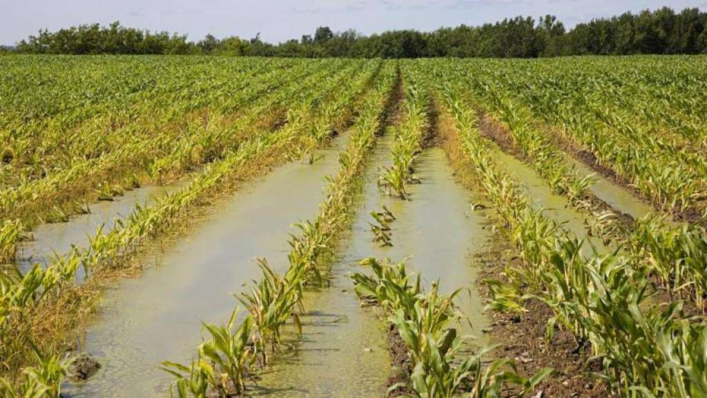 danni nell'agricoltura per il Maltempo