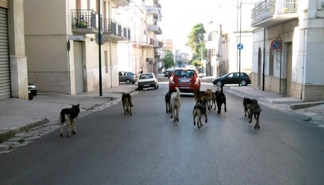 foto di un gruppo di cani randagi
