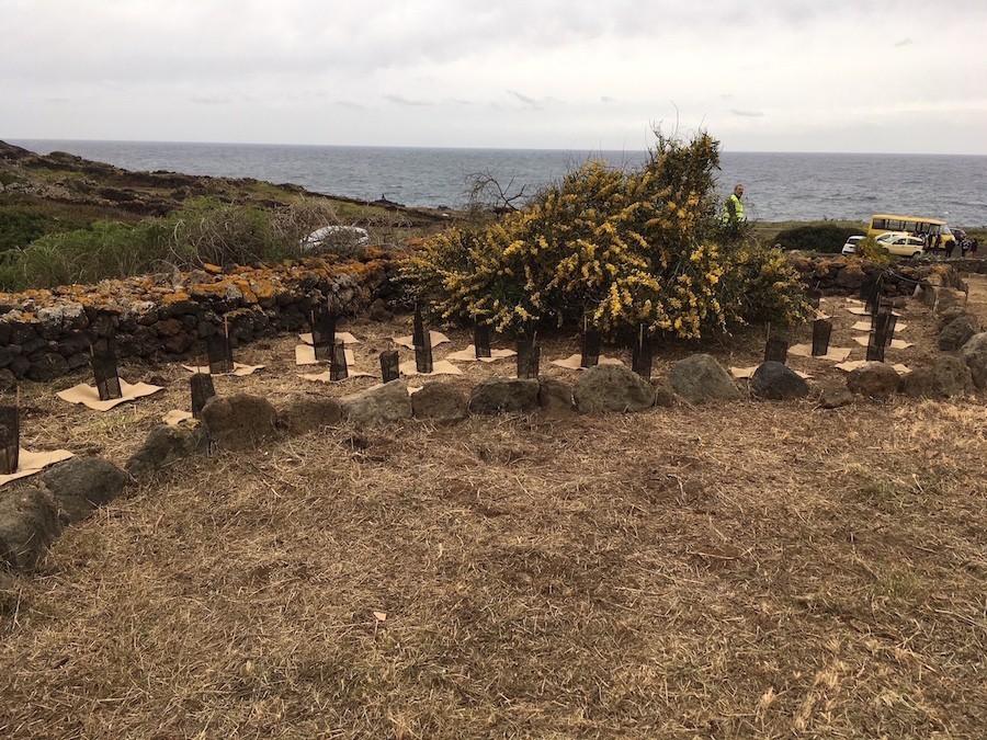 Mirti a Pantelleria