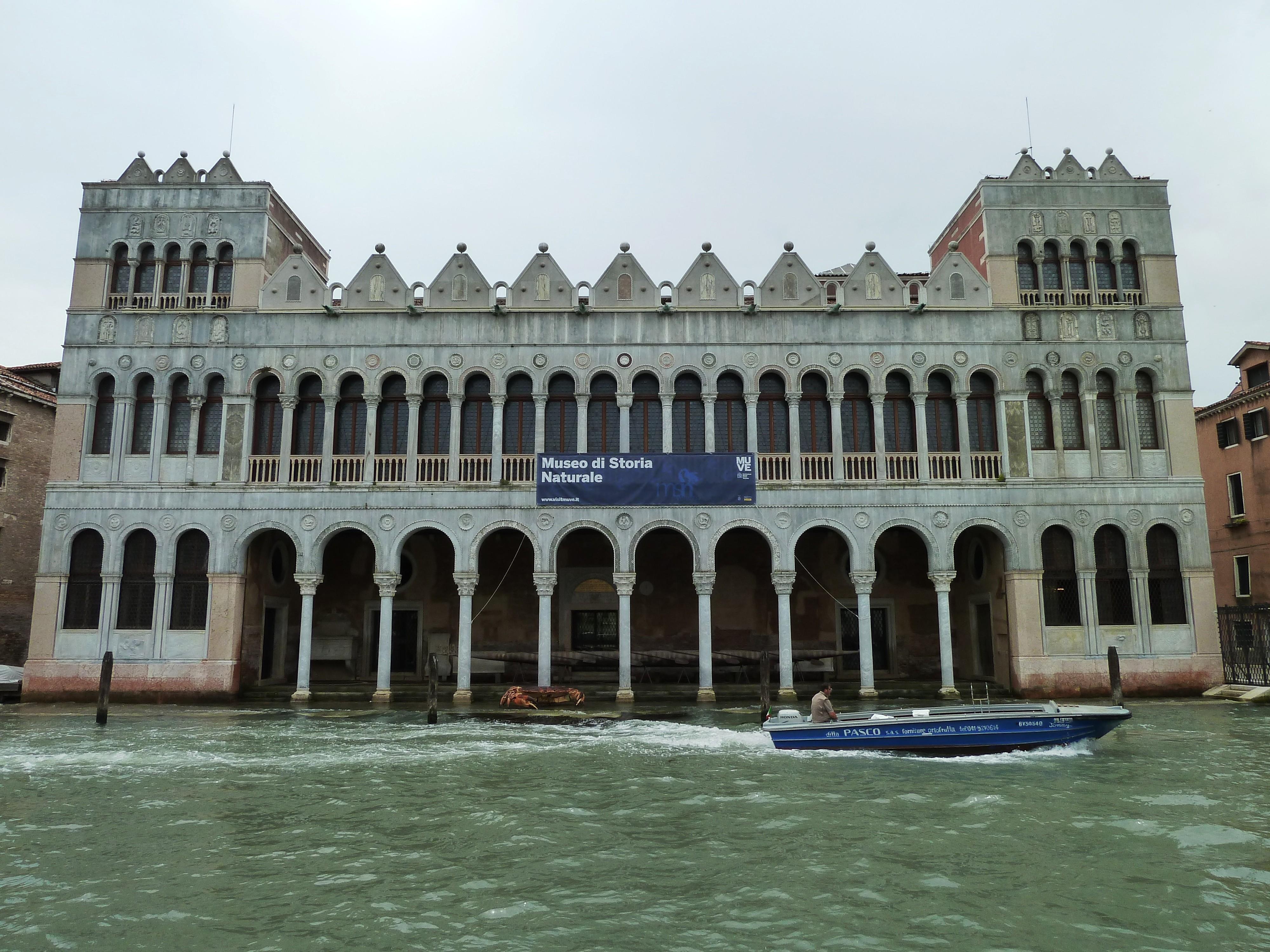 foto del Museo Storia di Naturale Venezia