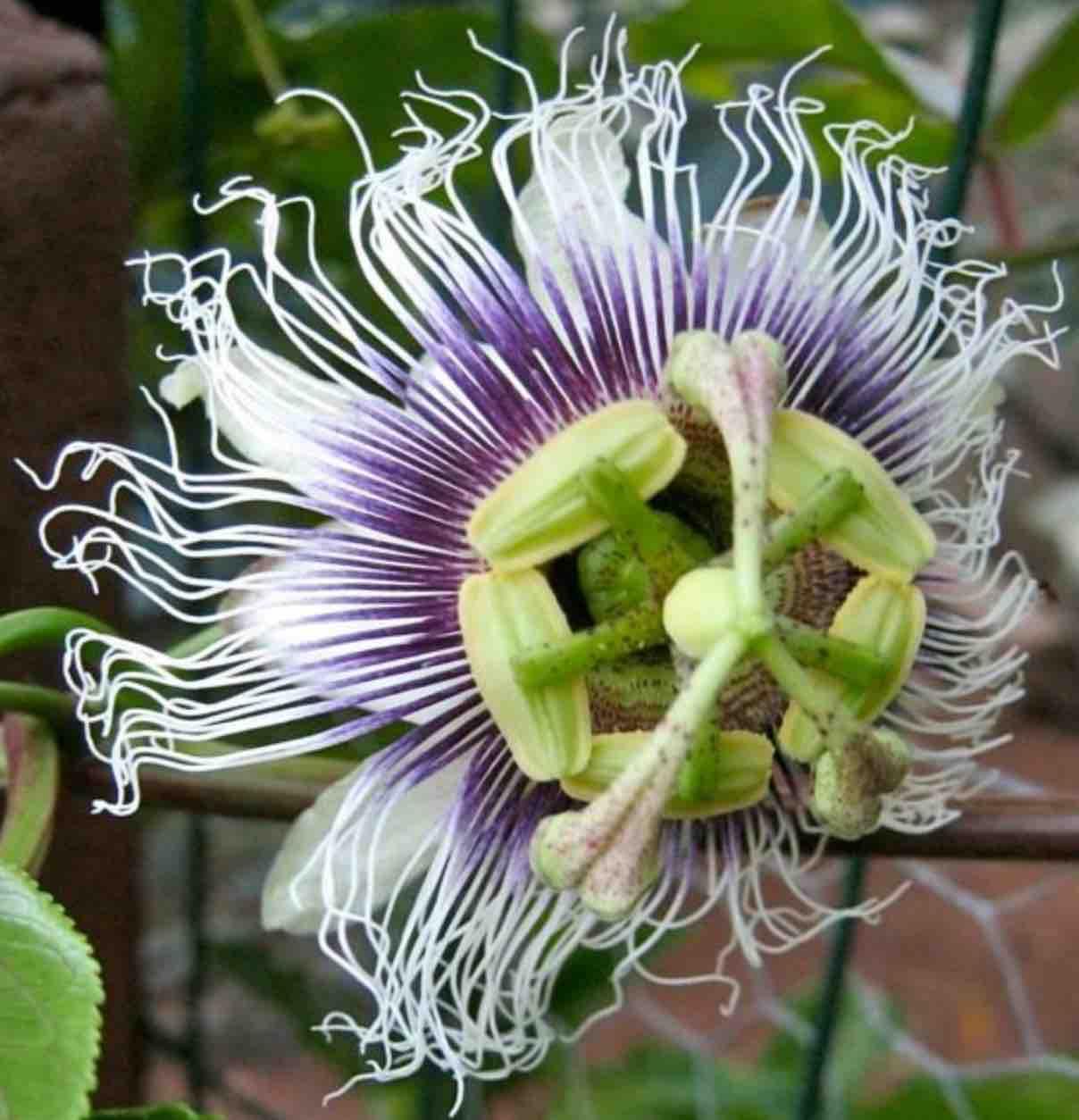 La Rete degli orti botanici
