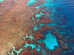 foto della Barriera Corallina
