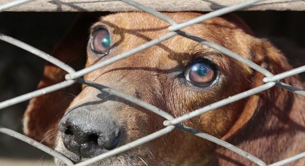 immagine di un cane in gabbia