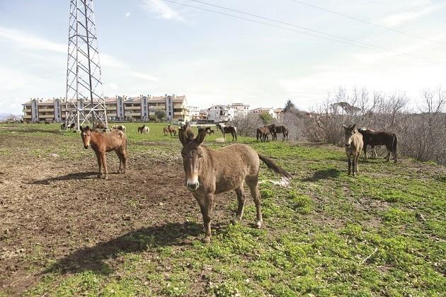 foto di asini e cavalli a Lunghezza di Sarah Carlet