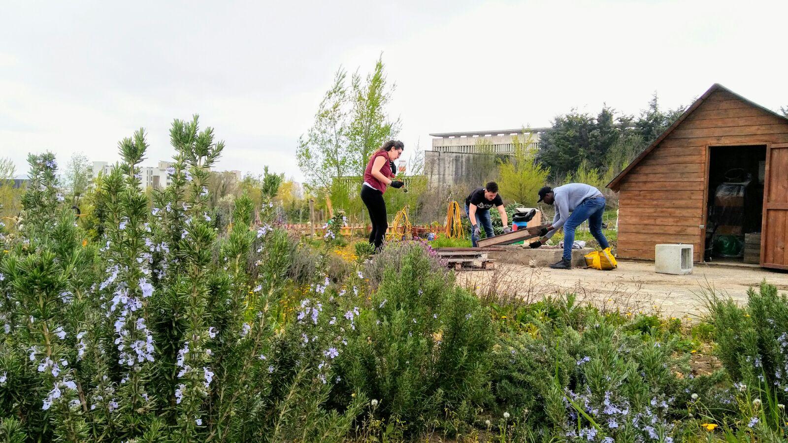 foto di volontari all'opera negli orti urbani a Potenza