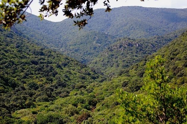 immagine di una foresta in Sardegna