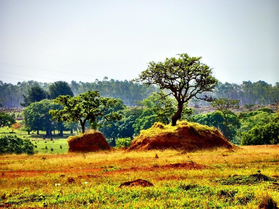 Cerrado Deforestation