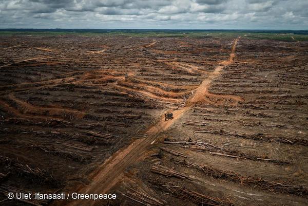 Immagini di Greenpeace sulla deforestazione in Indonesia