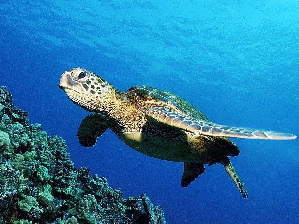 foto di una tartaruga marina