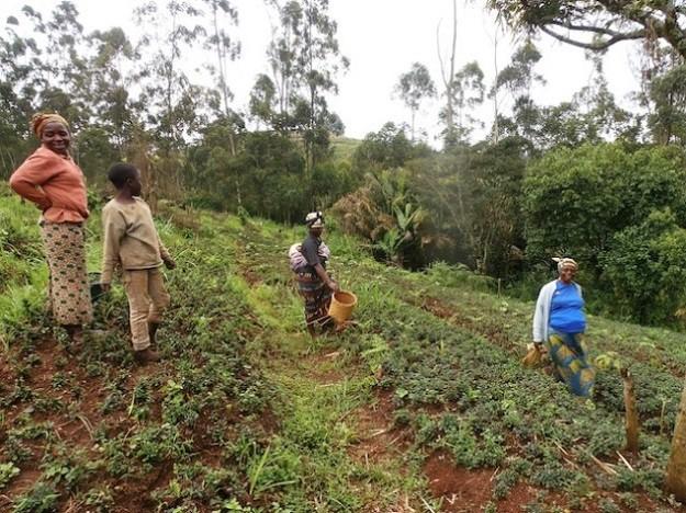 immagine di donne africane al lavoro nei campi