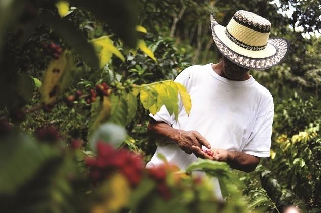 immagine di un uomo in una piantagione di caffè