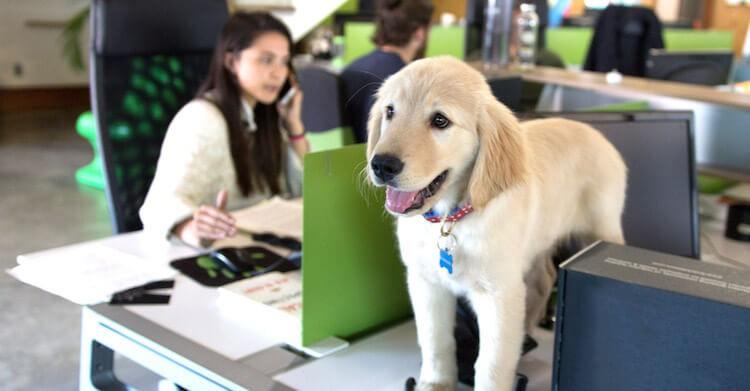 immagine di un cane In ufficio