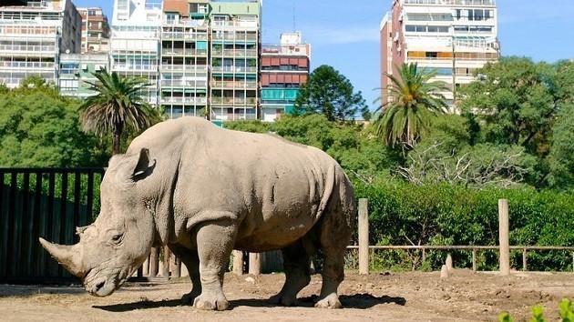 foto di un rinoceronte nello zoo di Buenos Aires