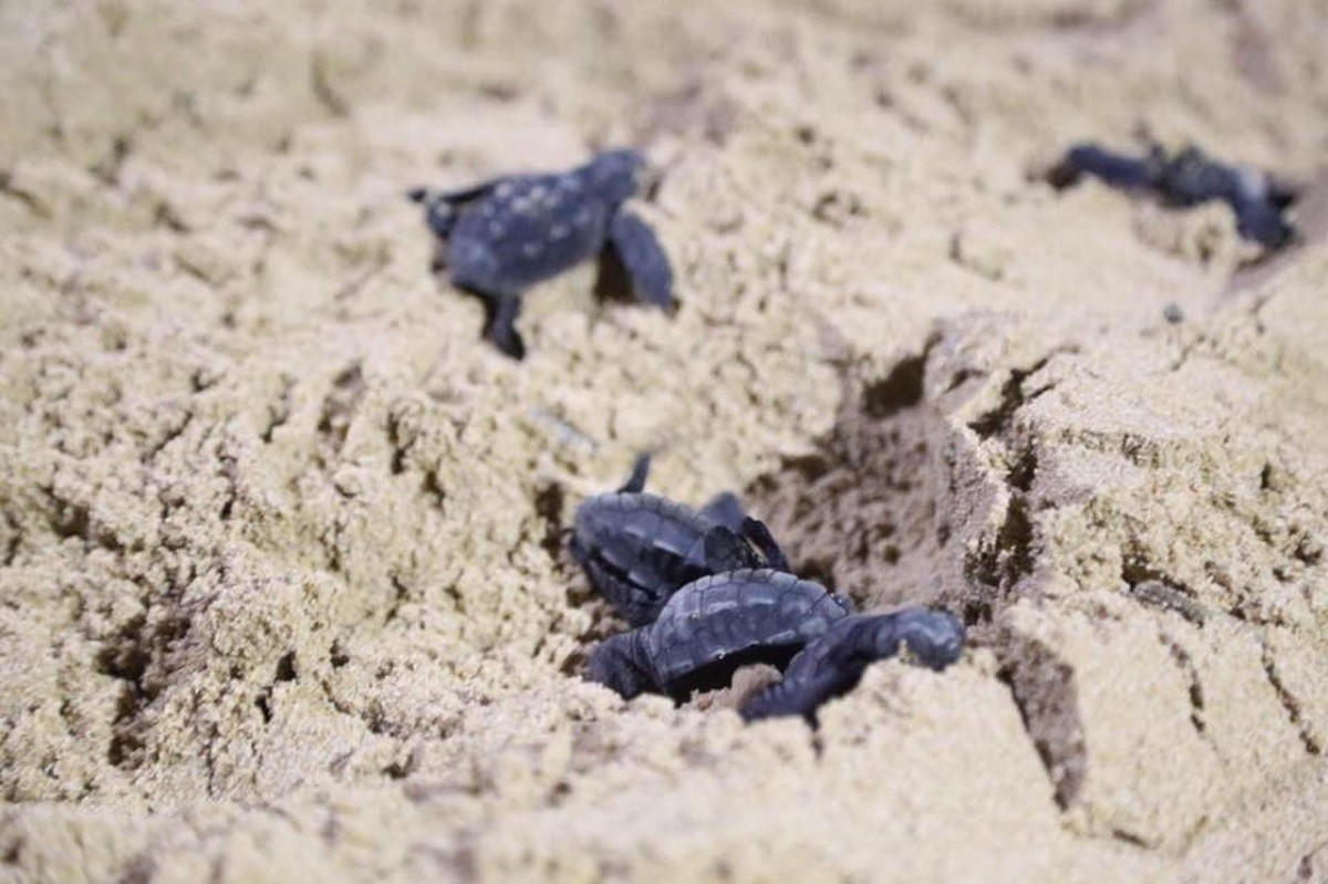 Caretta caretta: nuove schiuse in Sardegna