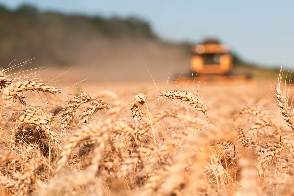 prezzo del grano