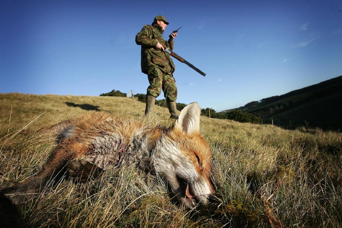 caccia vademecum regole