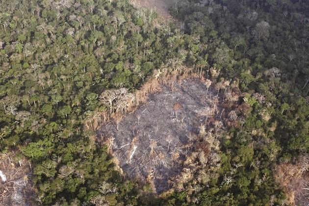 immagine aerea della deforestazione in Amazzonia