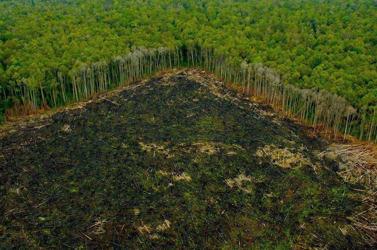 Deforestazione_UNEP_ONU