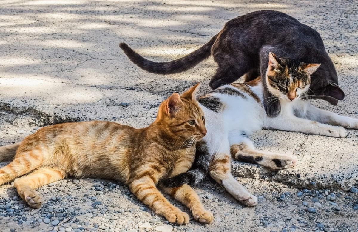 Cani e gatti randagi: il rapporto 2018 della Lav