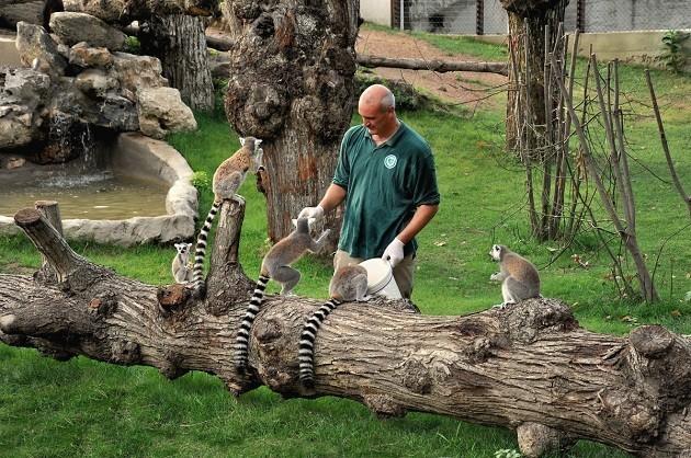 Un operatore del Bioparco di Roma gioca con degli animali