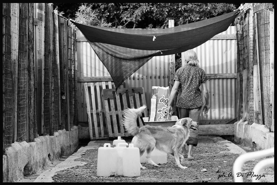 foto del rifugio per cani di A. Di Piazza