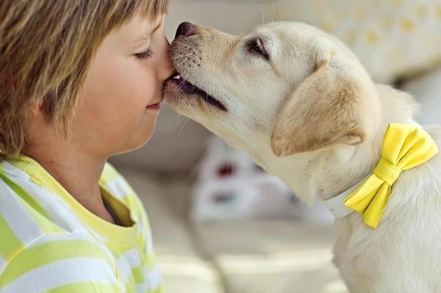Un cagnolino gioca con il proprio padroncino