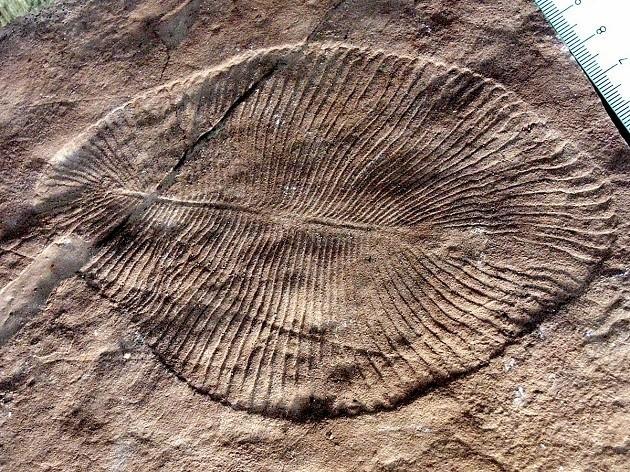 l'immagine del fossile