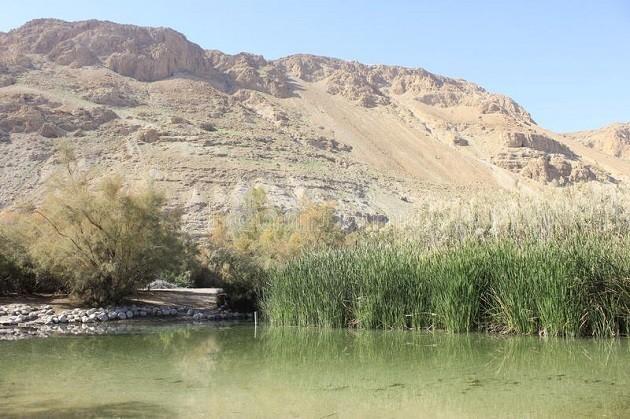 un'immagine della Riserva naturale Einot Zukim