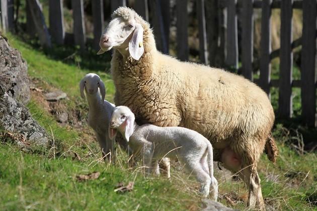 foto di agnelli