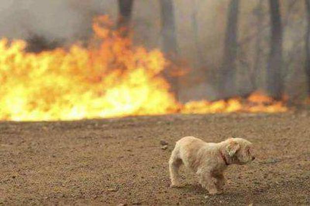 foto di un cane in un incendio