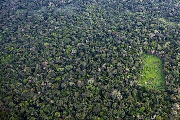 immagine aerea di una piantagione di coca