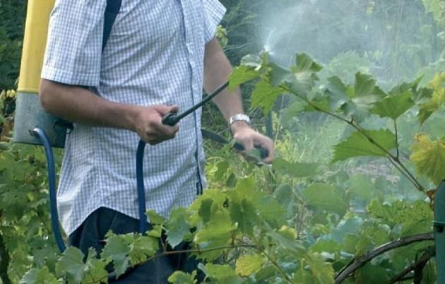 immagine di un agricoltore che dà il verderameVerderame