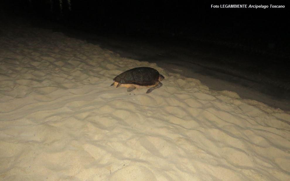 Speculazioni Sulla Spiaggia Delle Tartarughe