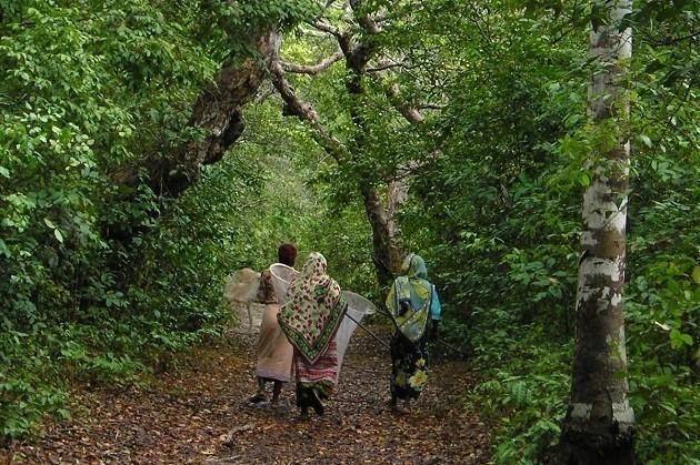 foto della Arabuko Sokoke Forest