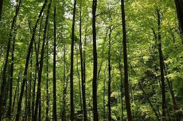 immagine di alberi ad alto fusto in una foresta dell'Uttar Predesh