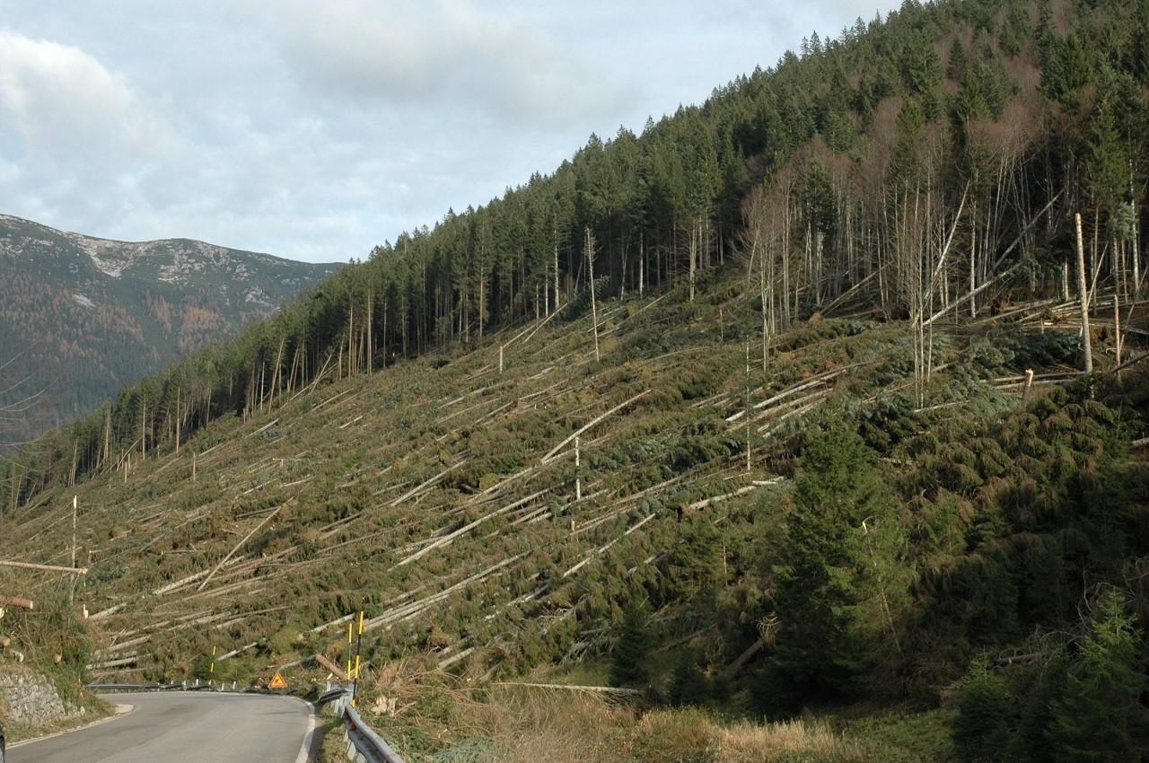Immagine di Boschi danneggiati a Trento Verso Trento