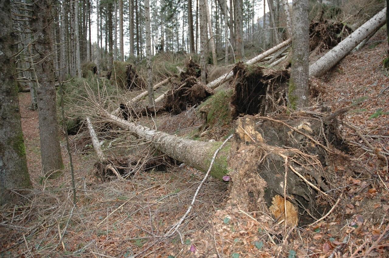 Immagine di boschi danneggiati dal maltempo
