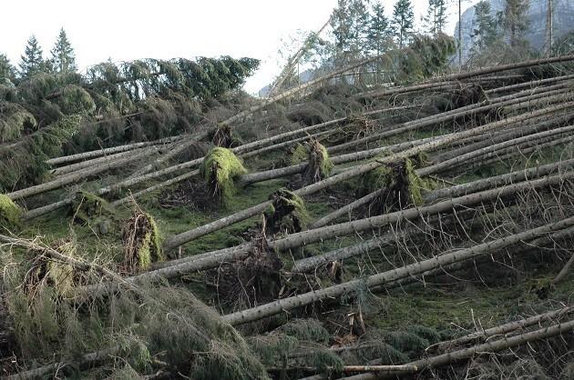 Alberi Caduti nell'Altopiano di Asiago