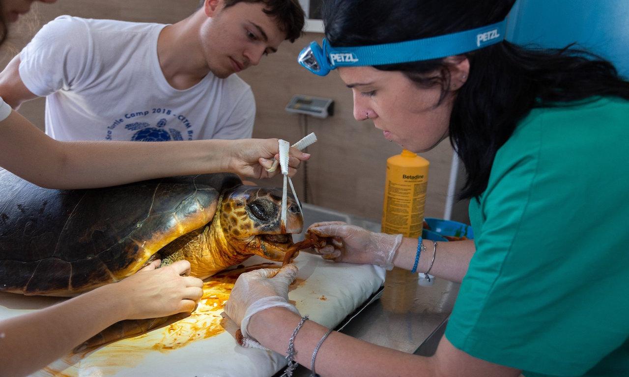 Il salvataggio di una tartaruga a Brancaleone