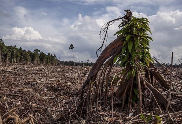 foreste abbattute per fare posto a piantagioni di olio di palma