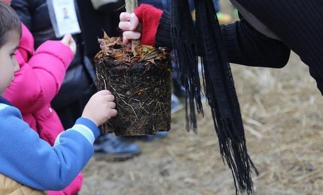 L'immagine di un albero piantato da un bambino